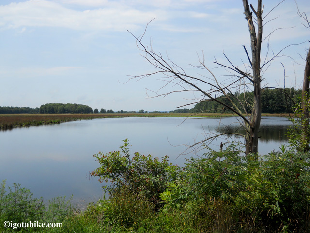 View from the observation deck in the Wildlife Management Area.
