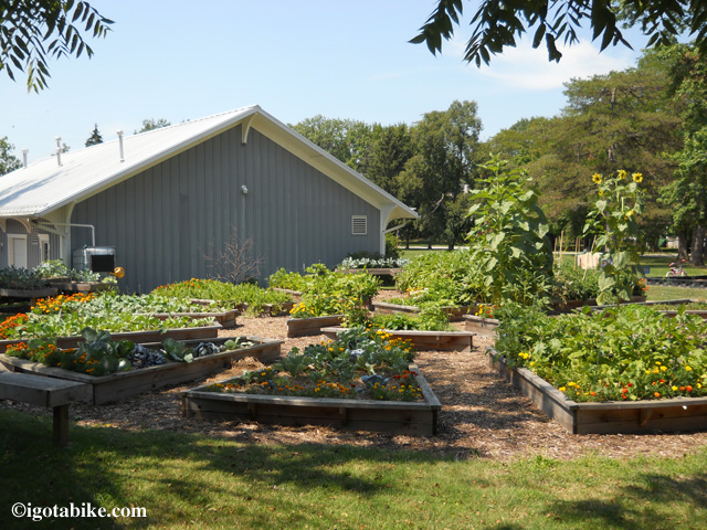 Nice community garden behind the historic Oberlin train station along The North Coast Inland Trail.